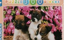 Picture of Jack Russell Terriers (puzzle 300 pieces)