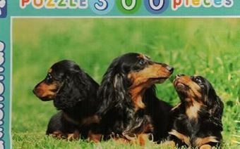 Picture of Dachshunds (puzzle 300 pieces)